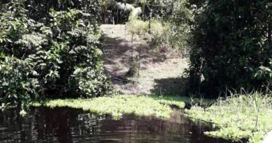 Ilhas artificias, criadas por indígenas, são encontradas na Amazônia