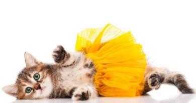 Coronavírus: estudo indica possibilidade de contaminação em gatos