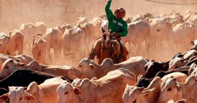 JBS investe quase R$ 500 milhões em práticas de bem estar animal