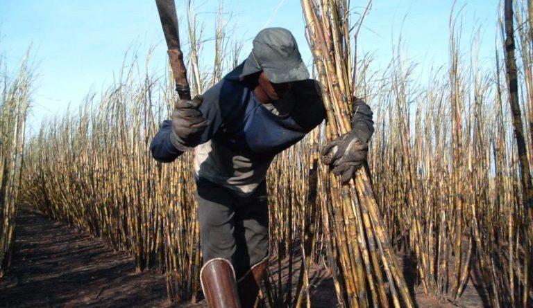 8.119 maranhenses resgatados de trabalho escravo no país