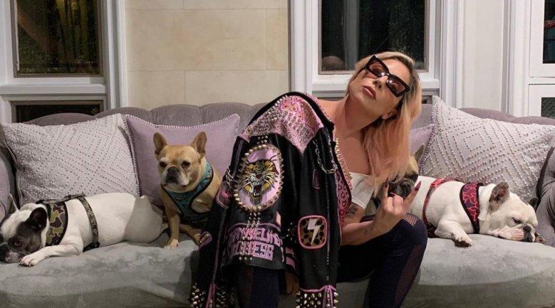 Lady Gaga recupera cachorros roubados durante passeio nos EUA – Jovem Pan