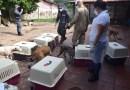 Vizinhos reclamam e justiça determina retirada de 100 cães da casa de idosa