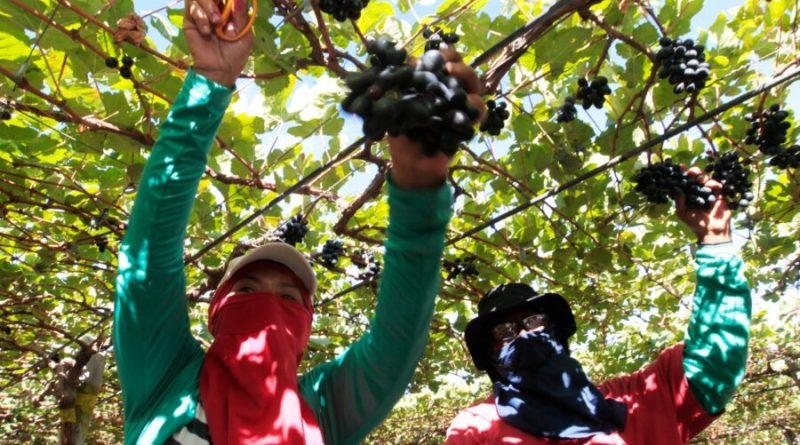 Governo Federal vai investir mais de R$ 34 milhões para fortalecer cadeia produtiva de frutas no DF e Entorno