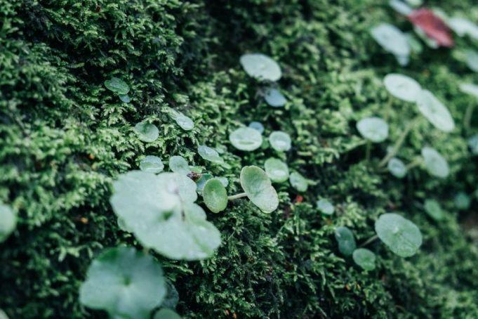 Une flore verdoyante
