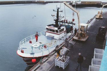Un retour de pêche au port du Guilvinec (29)