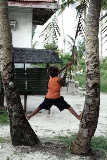Un enfant grimpe sur un cocotier