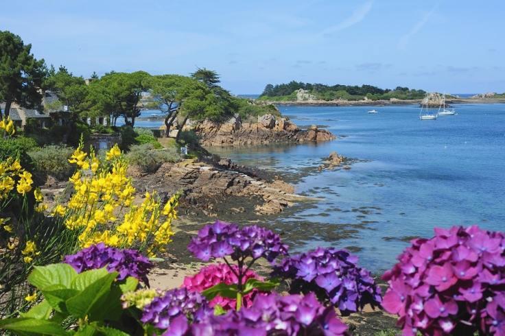 Les fleurs de l'île de Bréhat