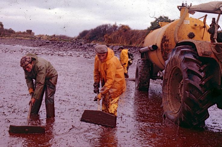 Hommes ramassant les nappes d'hydrocarbure sur les plages du nord Finistère