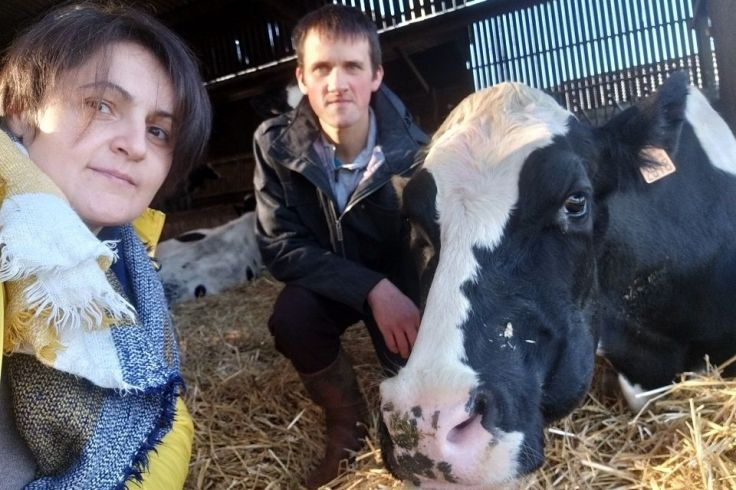 Angelina, Ludovic et une vache