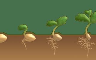 Comment faire germer des graines?