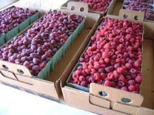 picked raspberries