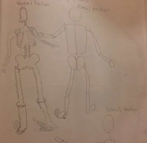 anatomy-and-torso-5