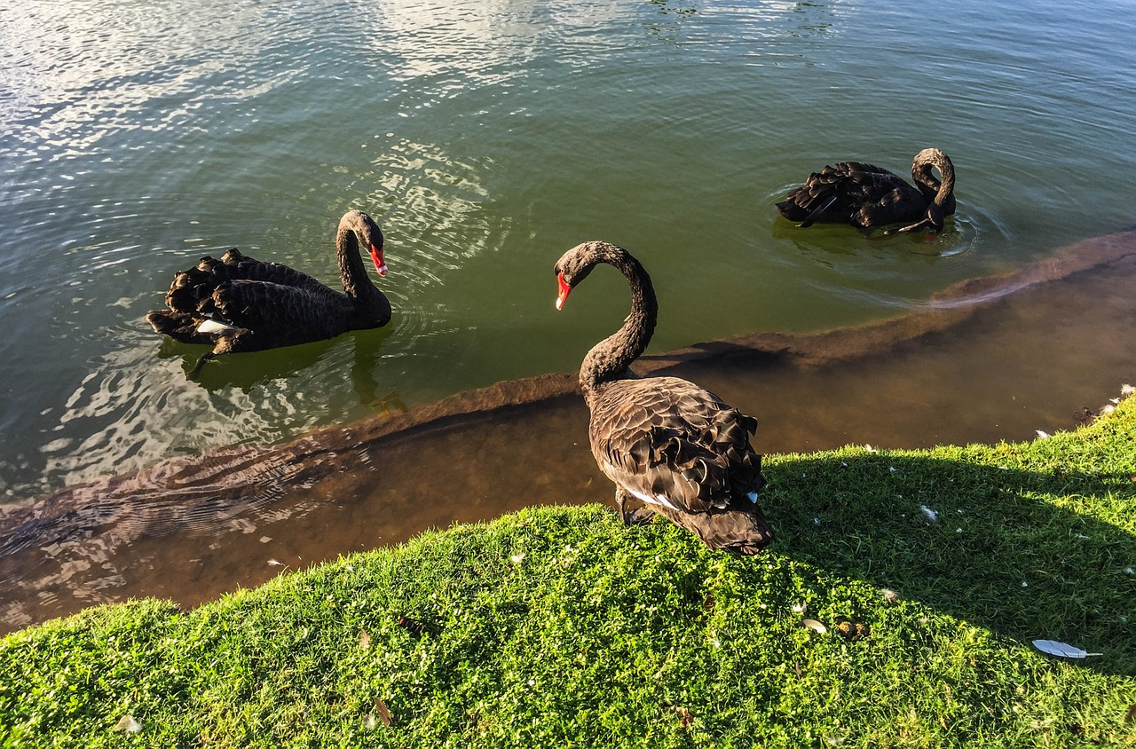 Black Swans And The Larry Portfolio
