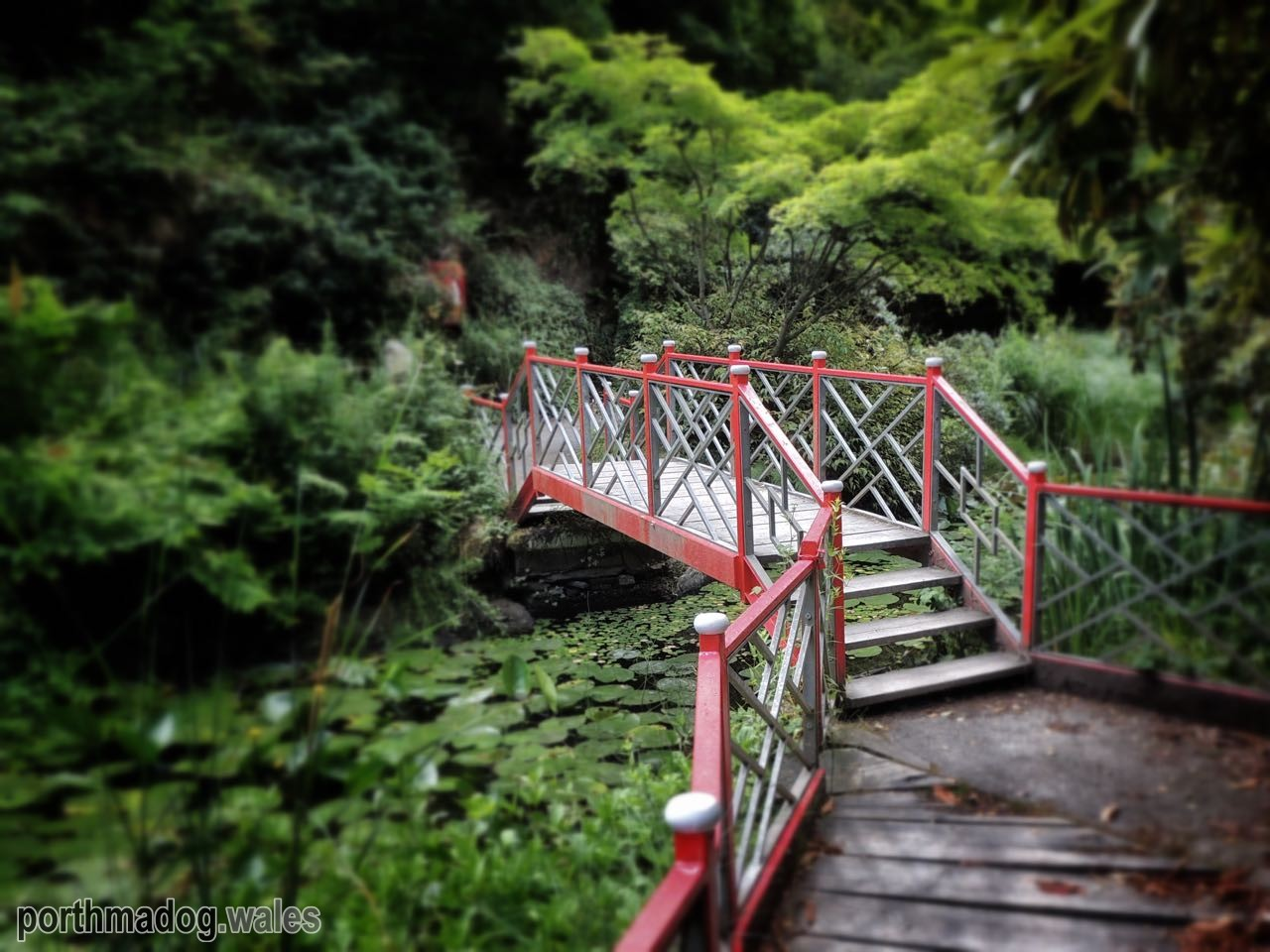 Bridge in the Japanese Garden, Portmeirion