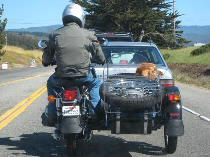 dog-in-sidecar.jpg