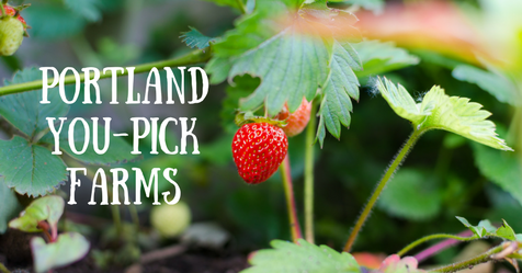 Portland you-pick farms