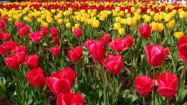 Spring Break in Portland