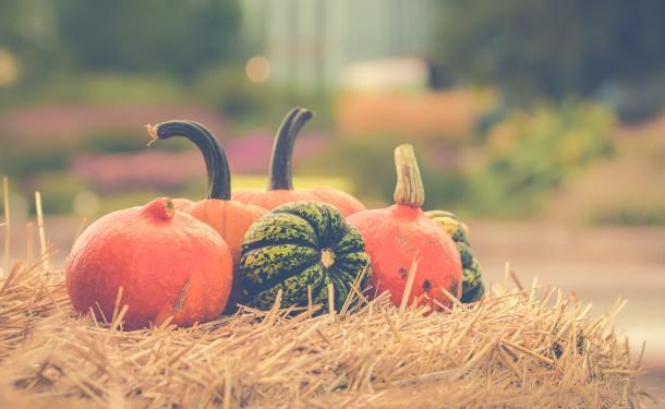 Lee Farms Fall Harvest Pumpkin Patch