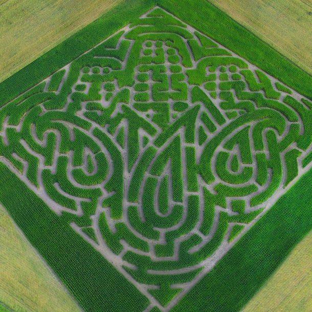 topaz farm corn maze discount