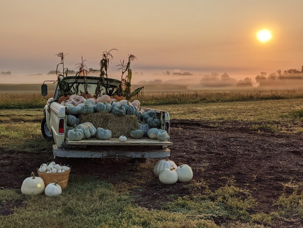 portland pumpkin patches topaz farm