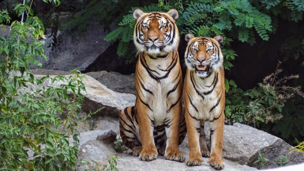 oregon zoo discounted admission