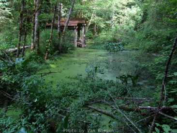 Buy late summer the water level in the pond is low. When water is high you can find different aquatic life.