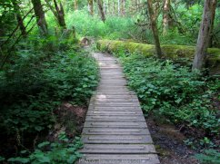 Wooden walk way over a damp area.