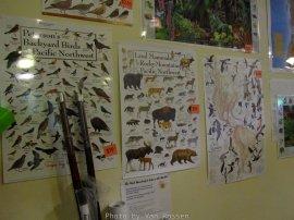 Posters of wildlife