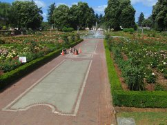 An overall view of the rose garden.