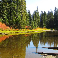 Fall color along the shore of the lake in the Indian Heaven Wilderness.