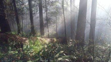 ForestPark_20180101_094752