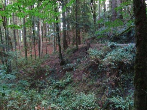 ForestPark_IMG_0491