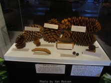 ForestMuseum_IMG_1932