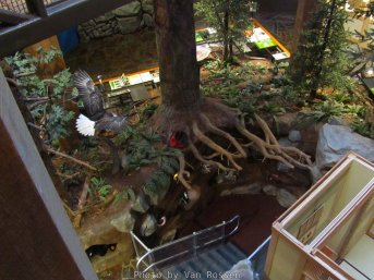 ForestMuseum_IMG_2007