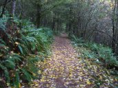 A section of trail. They did do a good job in building their trails. No wash outs or streaming on any of the trails.