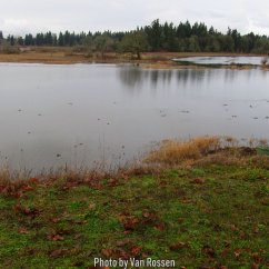 Winter time the wetlands fill to form pond for migrating ducks and geese.