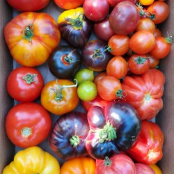 All Tomatoes