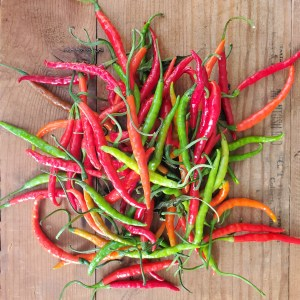Caribe pepper