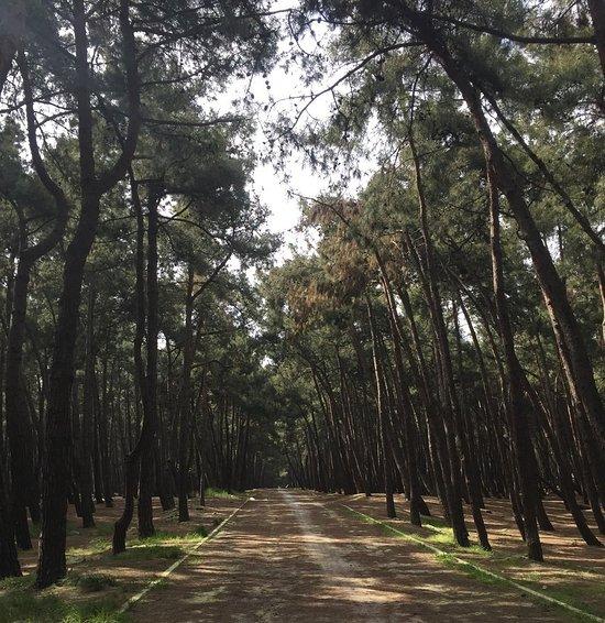 غابات فلوريا أتاتورك (Florya Atatürk Ormanı)