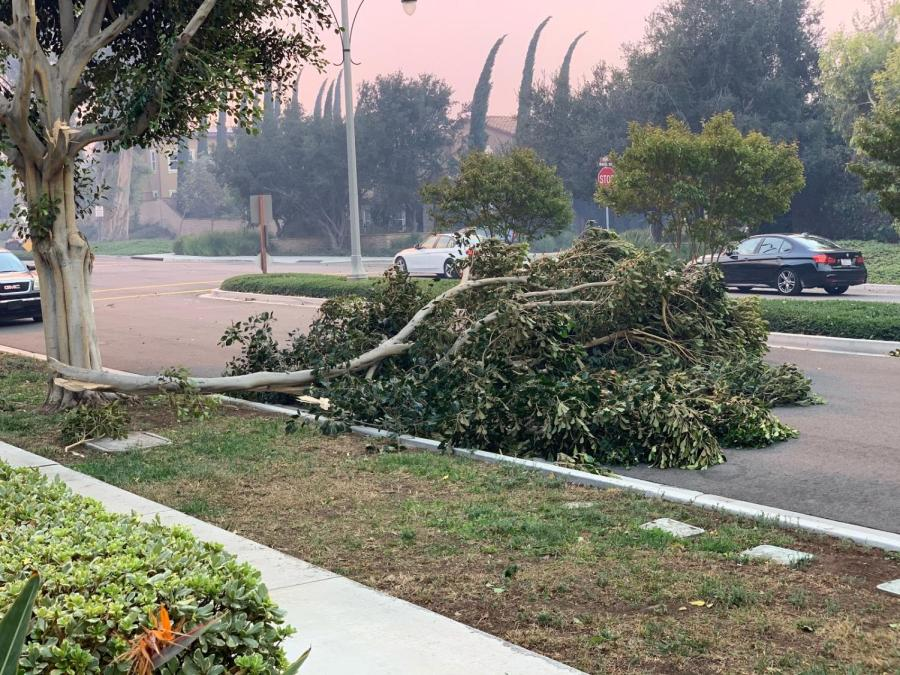 Vegetation and small structures in neighborhoods like Portola Springs and Woodbury East have been slightly damaged and misplaced due to heavy winds.