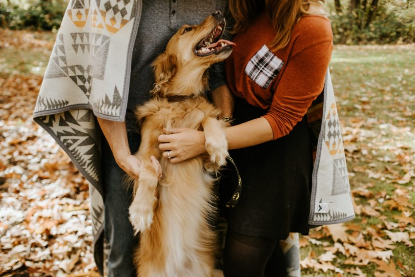 seattle wedding photographer fall arboretum engagement golden retriever