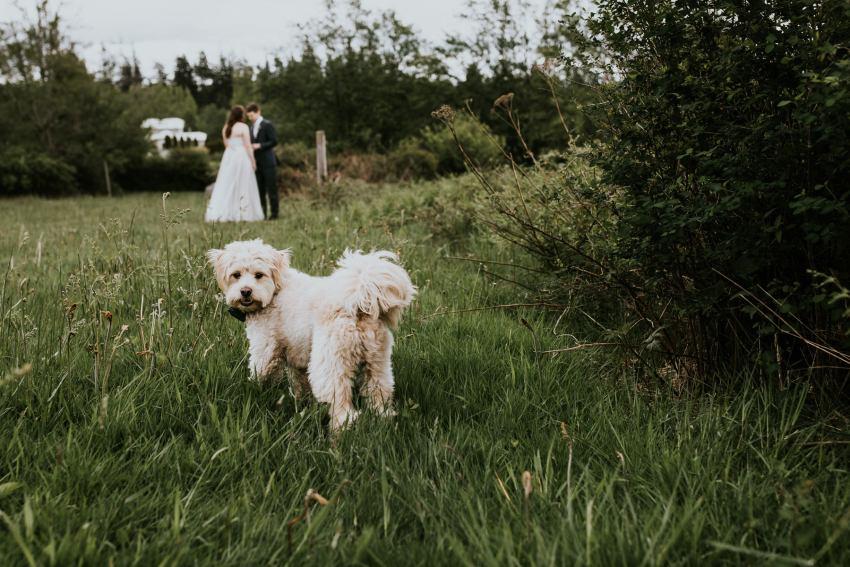 lummi island wedding seattle wedding photographer vow reading