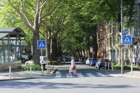 typische Allee im Kreuzviertel | Bildrechte: nickneuwald