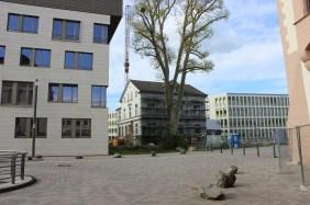 Konservatorium am PHOENIX See | Bildrechte: nickneuwald