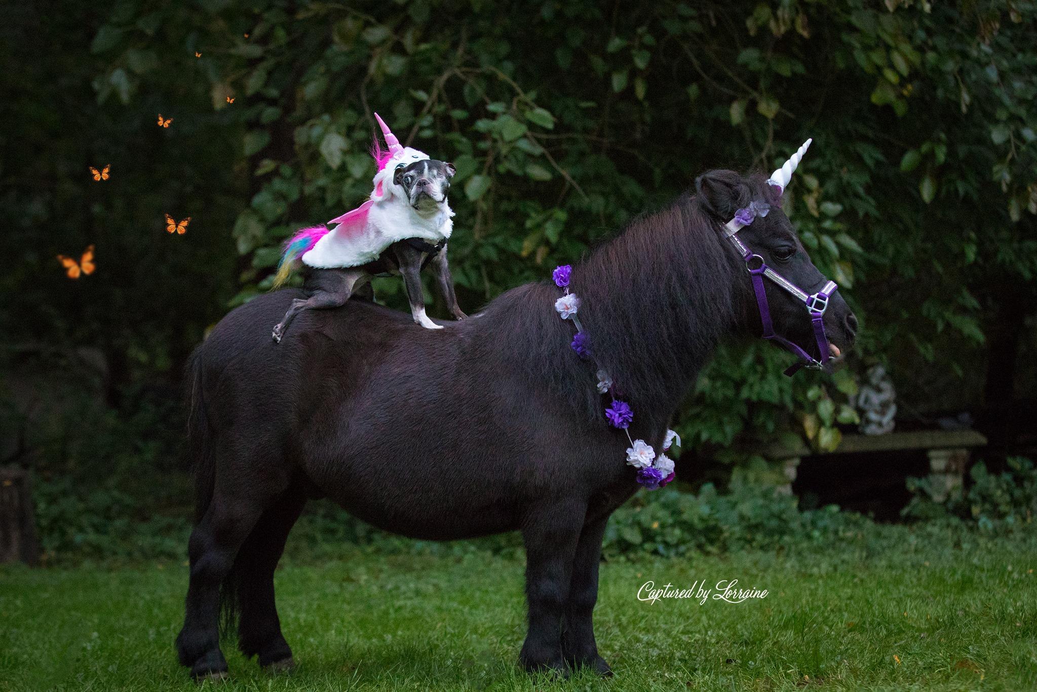Chloe's Unicorn Session