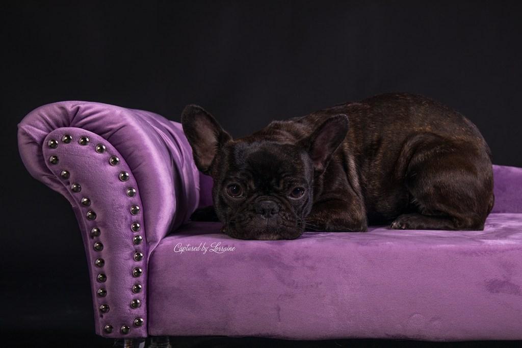 Pet Photography Barrington Illinois
