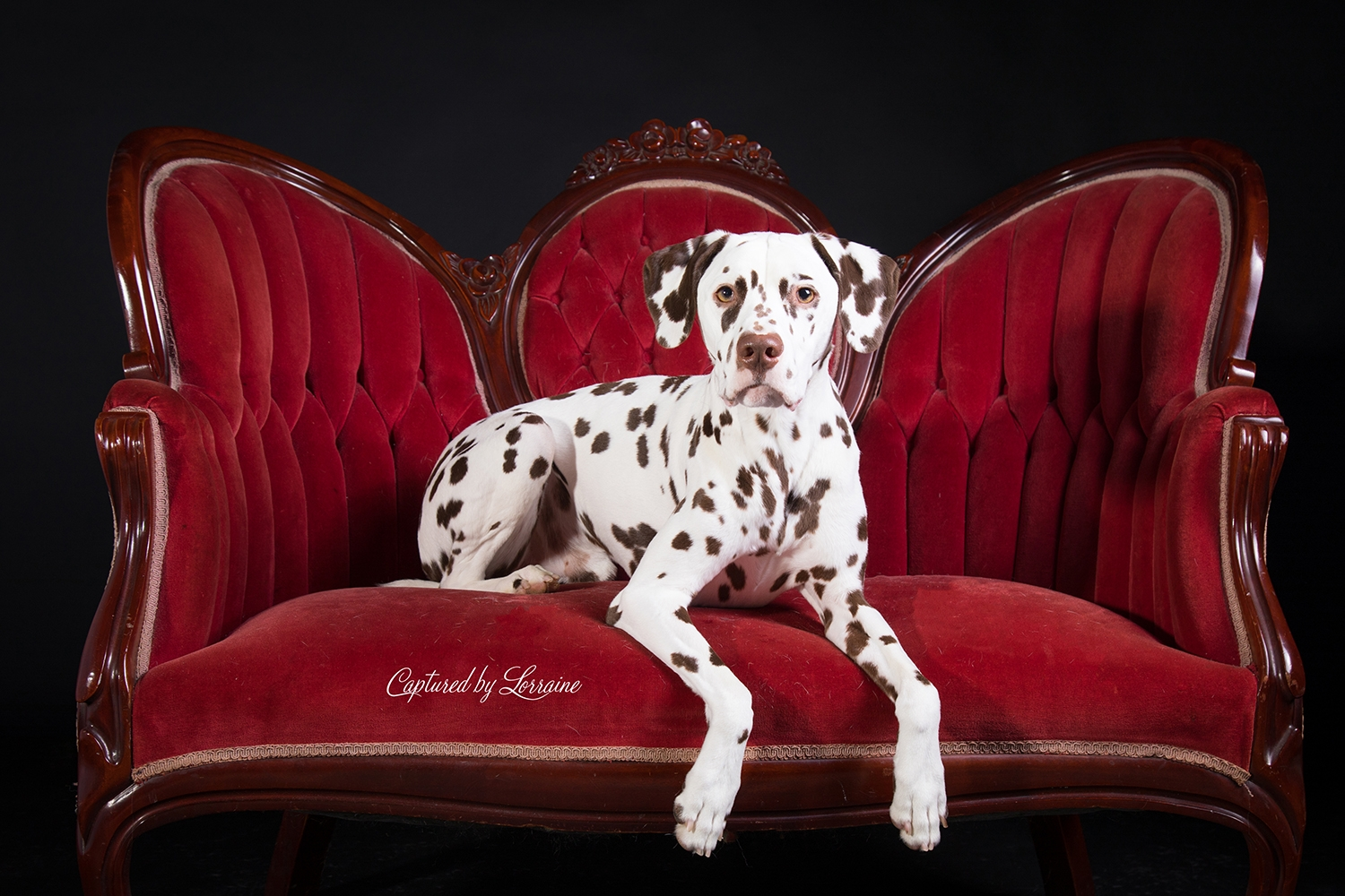 Pet Photography Crystal Lake Il