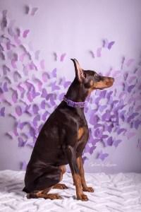 Studio Pet Photos Illinois (4)