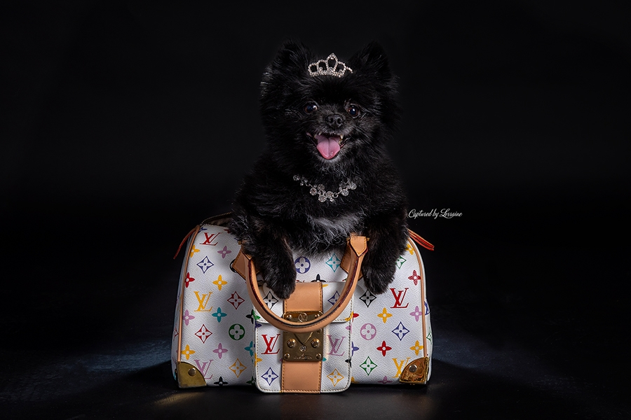 Illinois Pet Photographer-Mazie
