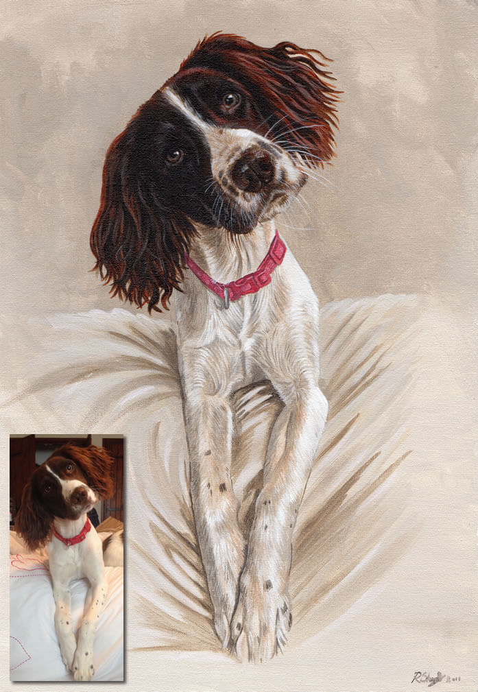 commission painting of springer spaniel